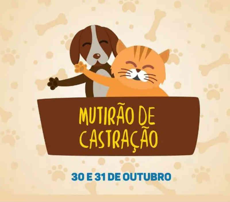 Mutirão de castrações em cães e gatos ocorre nos dias 30 e 31, em Irineópolis, SC