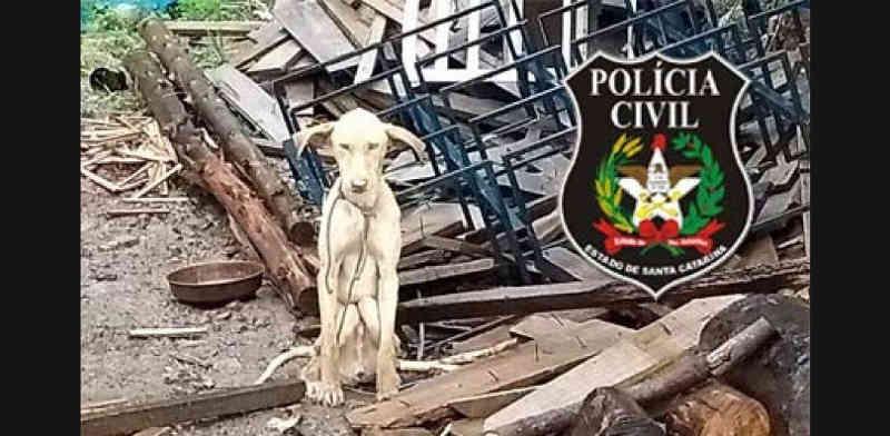 Polícia Civil resgata cães desnutridos em Tigrinhos, SC