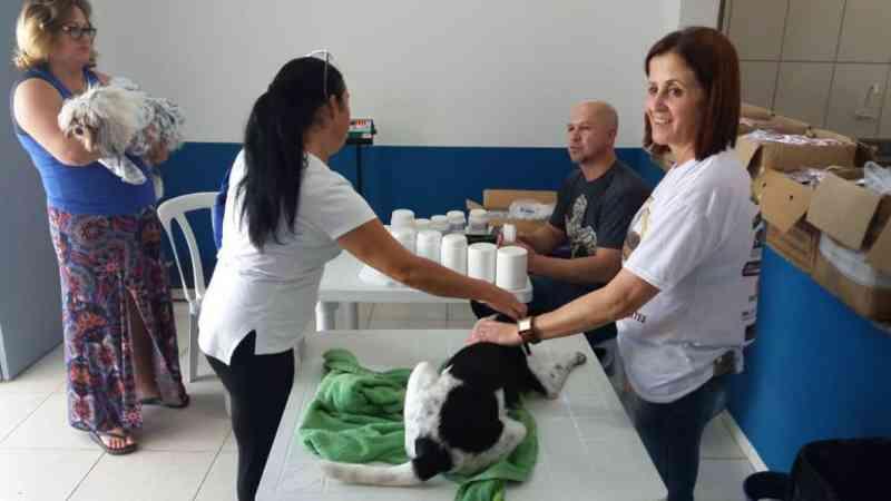 Mais de 150 animais são castrados por meio do mutirão em Barra Velha, SC