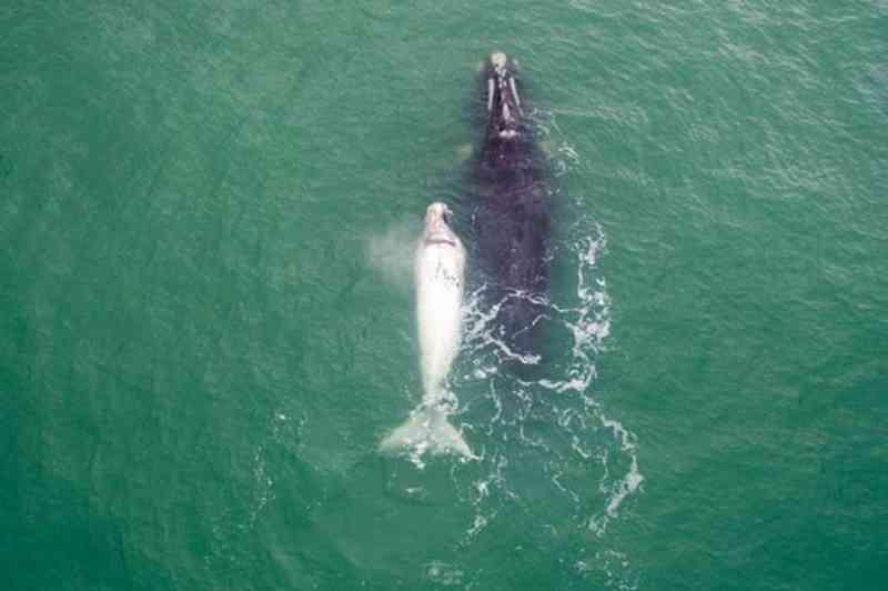 Comissão da Baleia aprova documento que reforça a proteção aos animais