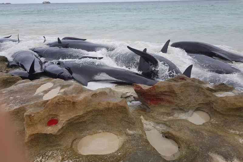 BALEIAS NA COSTA AUSTRALIANA: pedido de retomada da caça foi feito pelo Japão, e precisa ser aprovado por 75% dos países (/)