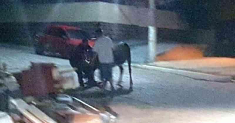 Policiais flagram cerca de 80 pessoas em farra do boi em Governador Celso Ramos, SC
