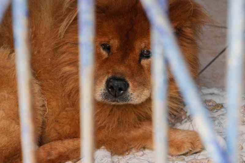 Canil municipal de Itajaí (SC) abre para adoção de animais neste domingo