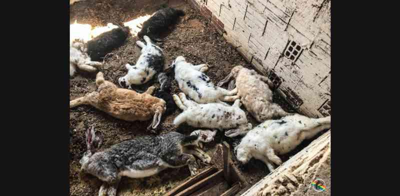 VÍDEO: Mais de 60 animais são encontrados mortos em São Miguel do Oeste, SC