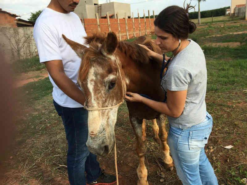 Homem é detido por maus-tratos a égua utilizada no transporte de móveis em Bálsamo, SP