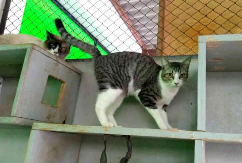 Com 60 gatos à espera de novo lar, Zoonoses de Bauru (SP) faz apelo por adoção