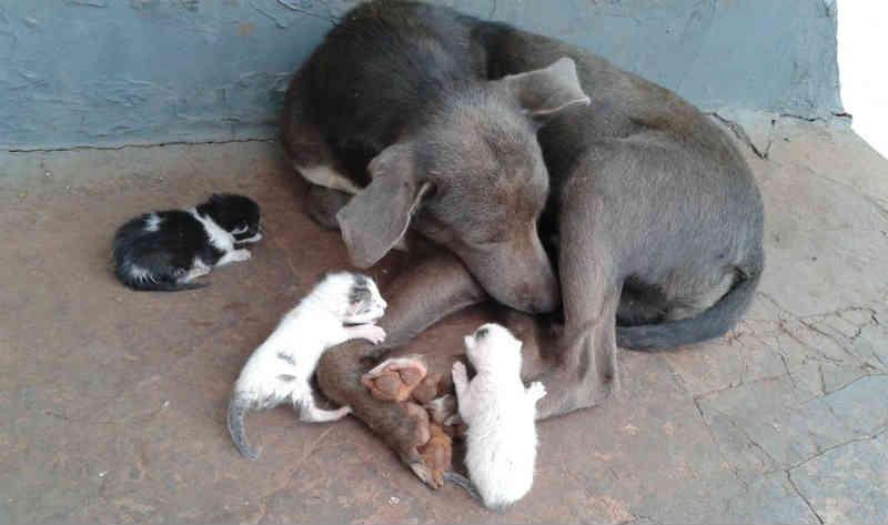 Cachorra 'adota' filhotes de gato abandonados em cemitério de Bocaina, SP