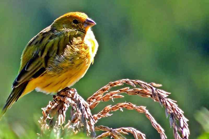 18 aves são resgatadas de cativeiro ilegal em Cotia, SP