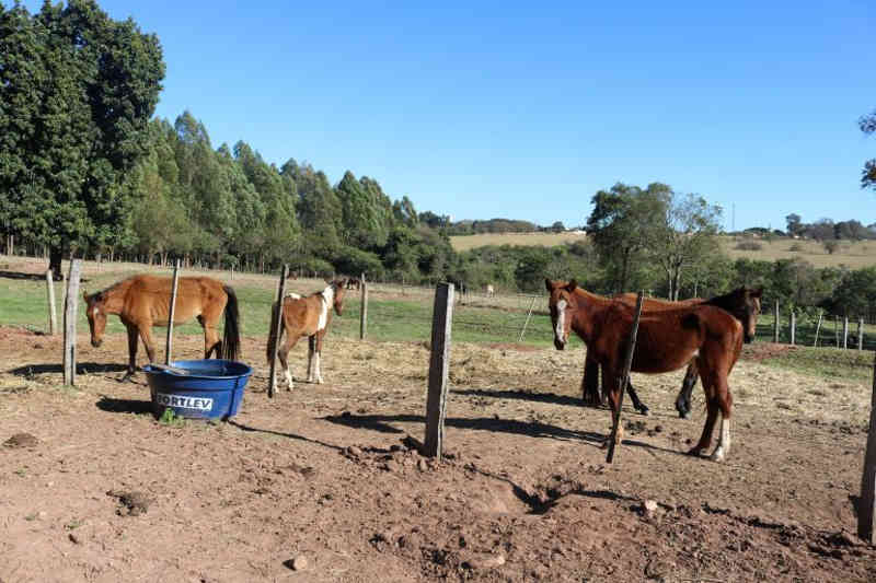 MPE e Prefeitura garantem cuidados a animais abandonados em Rancharia, SP