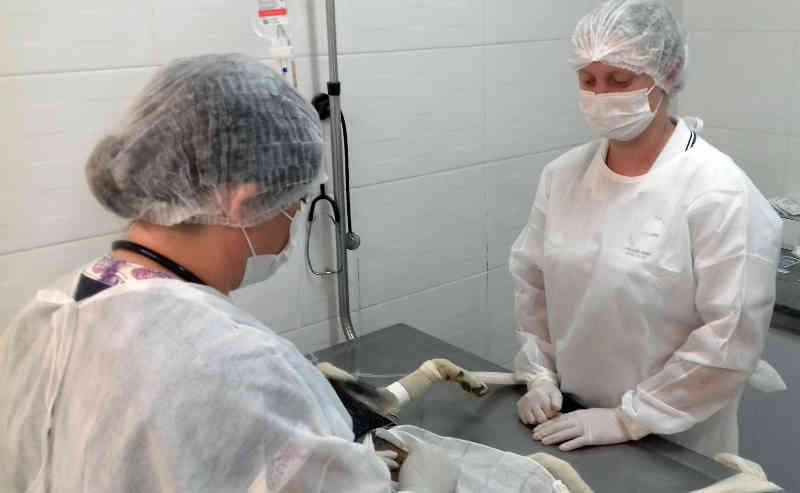 Em 8 meses CCZ castra 2600 animais e supera média anual de cirurgias em Rio Claro, SP