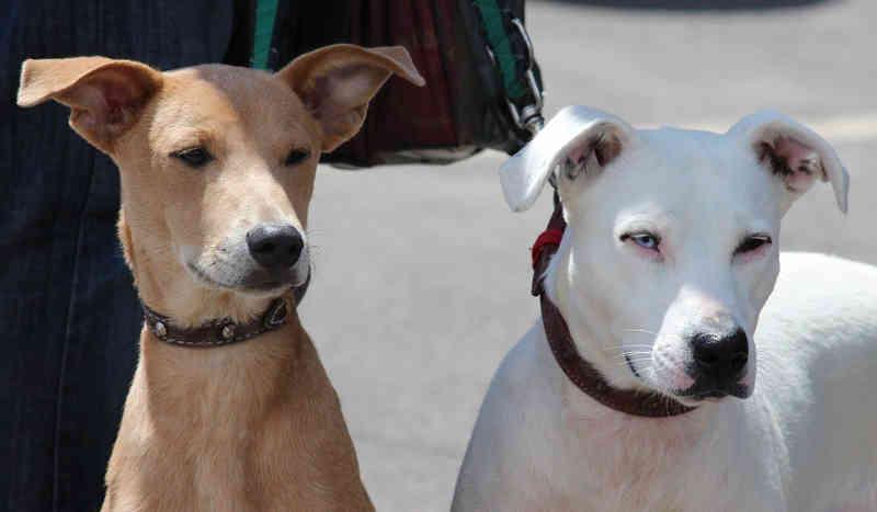 Poupatempo e Ganha Tempo Cidadão cadastram cães e gatos para castração em Rio Preto, SP