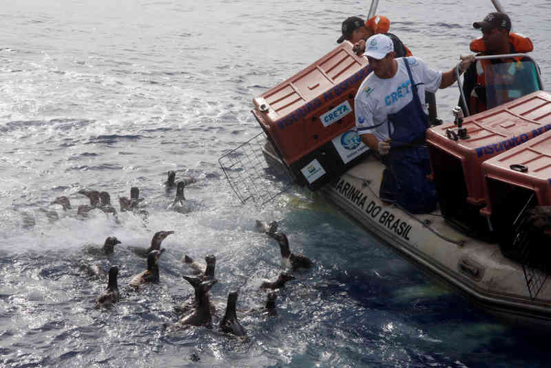 Instituto dedica-se à proteção e salvamento de animais marinhos no litoral norte, SP