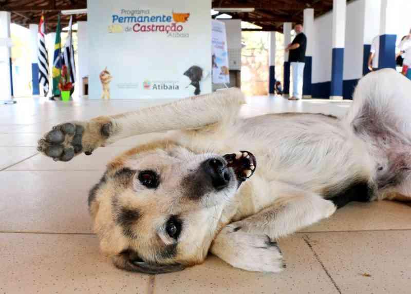 Atibaia (SP) abre inscrições para programa de castração de cães e gatos dia 11 de setembro
