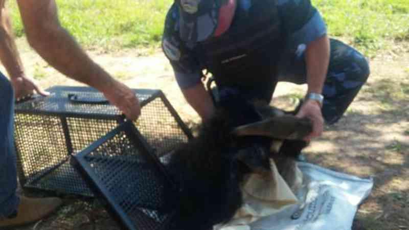 Grupo de proteção ambiental da Guarda Civil Municipal (GCM) socorreu o filhote - GCM/Divulgação