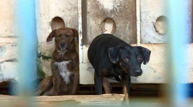 Abrigos de animais da região de Campinas (SP) têm lotação máxima; Valinhos abre feira de adoção neste domingo
