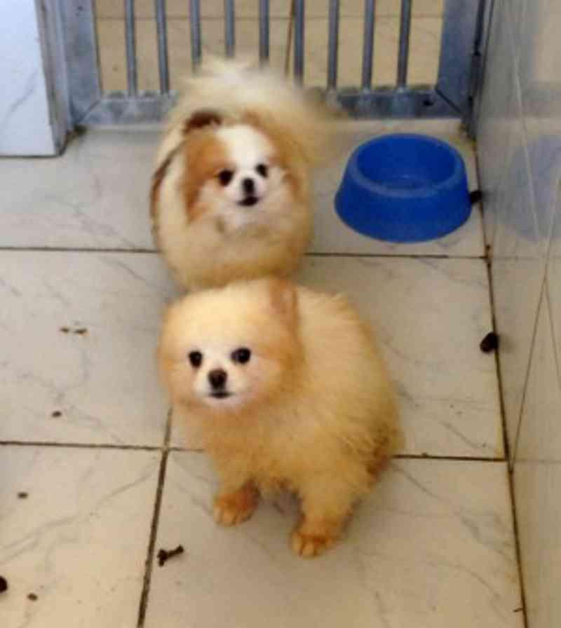 63 cães em criadouro comercial são resgatados de canil em Itupeva, SP