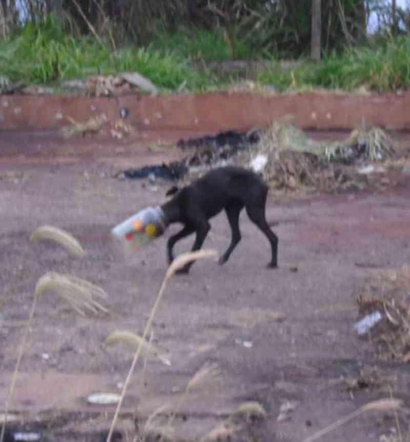 Polícia Rodoviária Federal resgata cão com pote na cabeça em Marília, SP