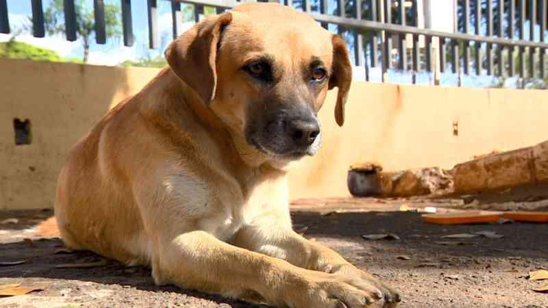 Quatro anos após morte da tutora, cãozinho permanece em cemitério de Mogi Guaçu (SP): 'Ele é importante para nós'