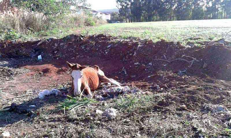 Cavalo estava em condições de abandono no Jardim Suécia, em Mogi-Guaçu, SP