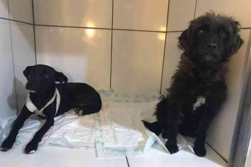 Instituto Luisa Mell socorreu os dois animais que passam bem (Instituto Luisa Mell/Veja SP)
