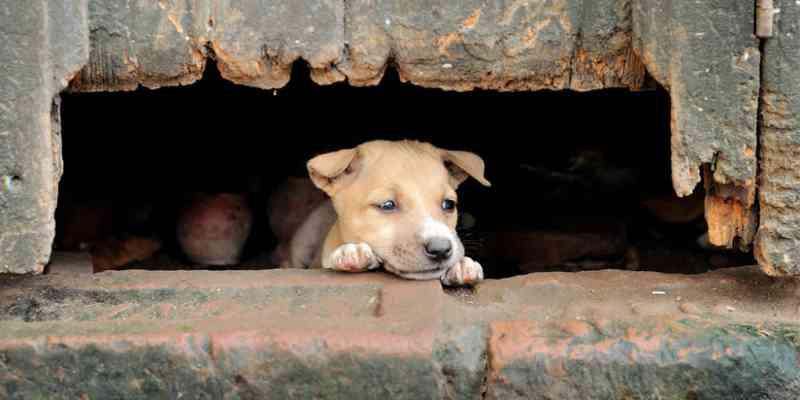 Ativistas apresentam proposta para o controle populacional de cães e gatos ao Governo de SP
