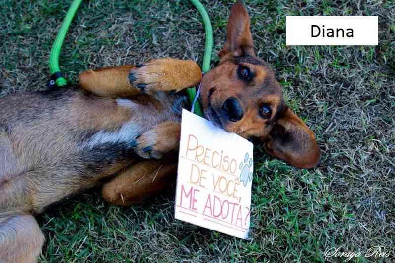 A feira de adoção acontece neste Sábado na Poli Pet - Divulgação/PMT