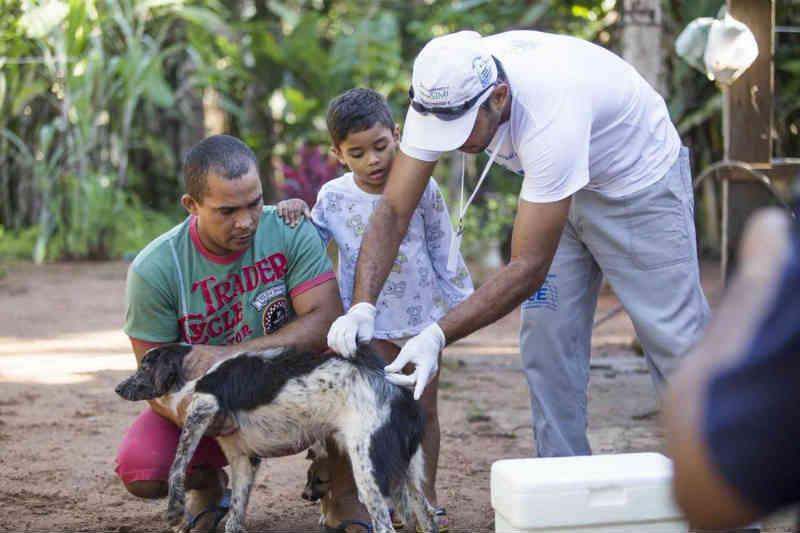 Agentes realizam vacinação de cães e gatos contra raiva em Buritirana, MA