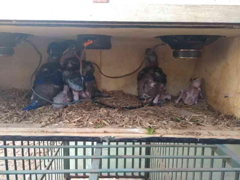 Mais de 50 aves são apreendidas em Itacajá — Foto: BPMA/Divulgação