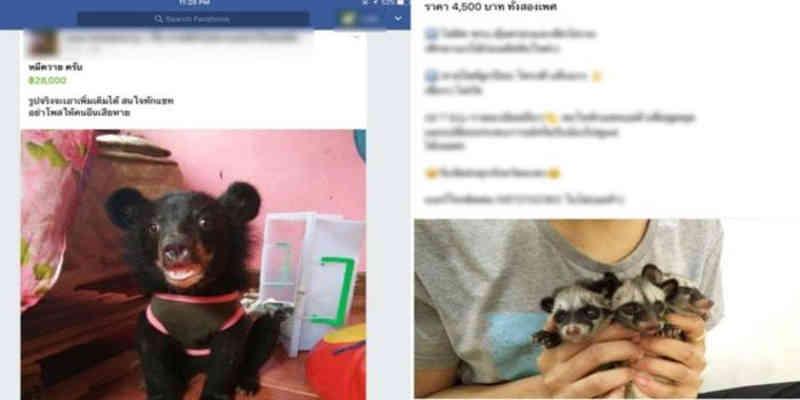 Comércio de animais no Facebook foi exposto na Tailândia