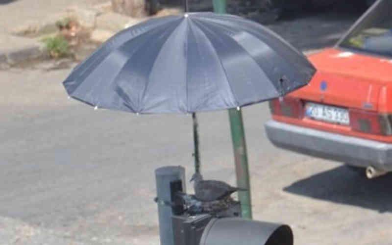 Incríveis pessoas colocaram um guarda-chuva em cima de um semáforo para proteger mamãe pomba e seus bebês; fotos