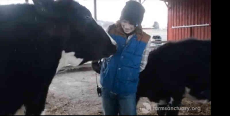 Este vídeo de uma vaca resgatada a distribuir beijos fará você ganhar o dia