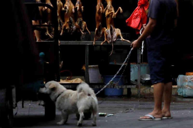 Vietname pede abolição do consumo da carne de cão