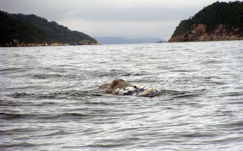 ICMBio esclarece sobre procedimentos de retirada de redes de pesca em baleias-franca