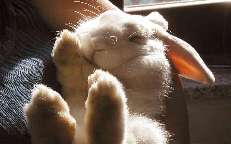 8,3 milhões de pessoas assinaram petição entregue à ONU pedindo proibição mundial de testes em animais!