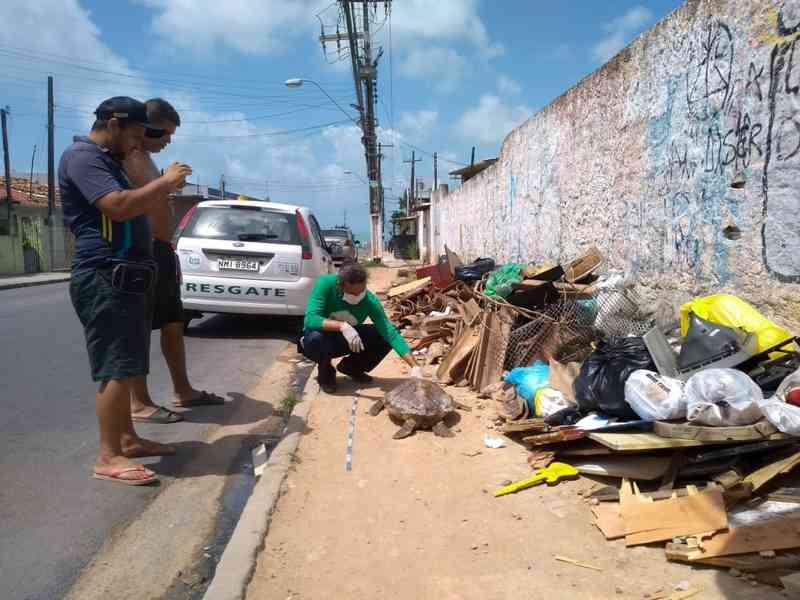 Tartaruga morta levada por homem dentro de ônibus é encontrada em lixo no Jacintinho, em Maceió, AL