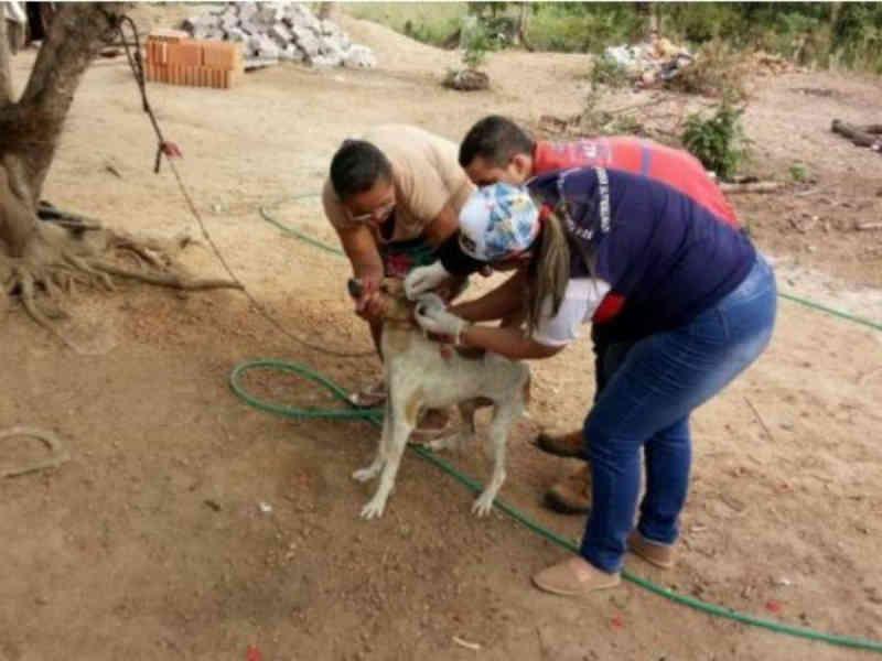 ONG lamenta a matança de mais de 900 cães e critica postura do poder público em Alagoas