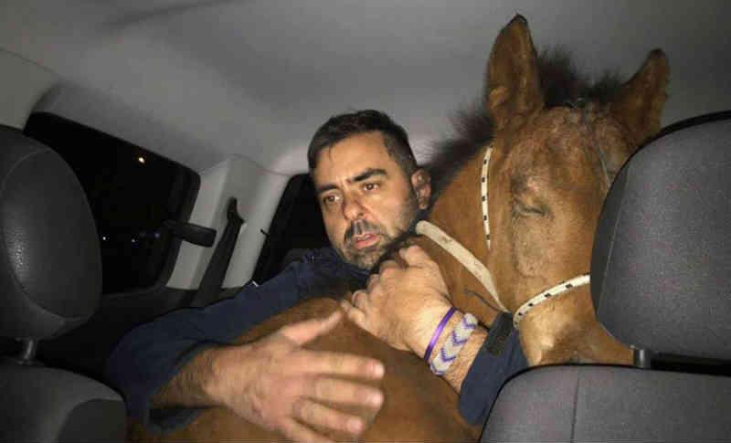 Matou seu cavalo a facadas por não conseguir puxar a carroça com que estava coletando papelão