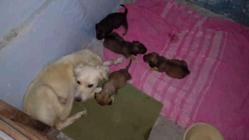 Grupo de Proteção de Animais de Amargosa (BA) pede ajuda com materiais