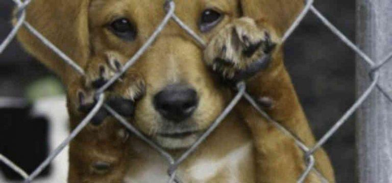Maus-tratos e envenenamento de animais em Amargosa, BA
