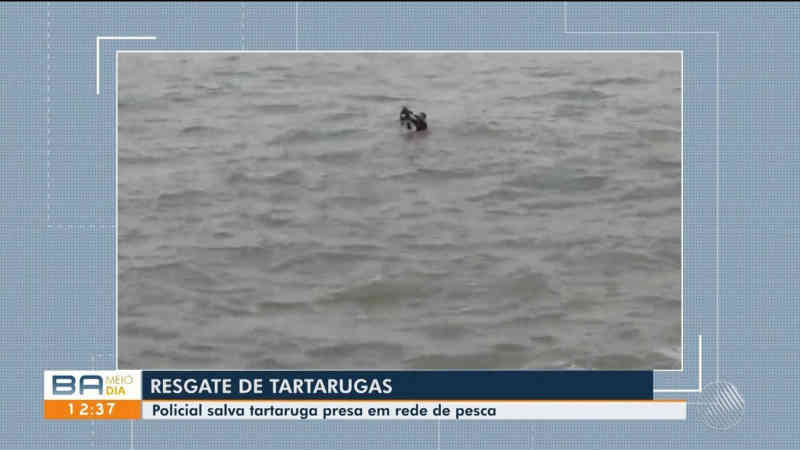 Tartaruga é resgatada de rede de pesca no litoral sul da BA; cerca de 110 animais já foram encontrados mortos na região