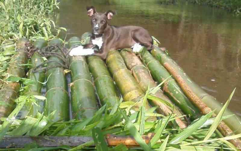 Família lamenta morte de cachorro baleado em carreata na Bahia: 'Acabou com a gente'