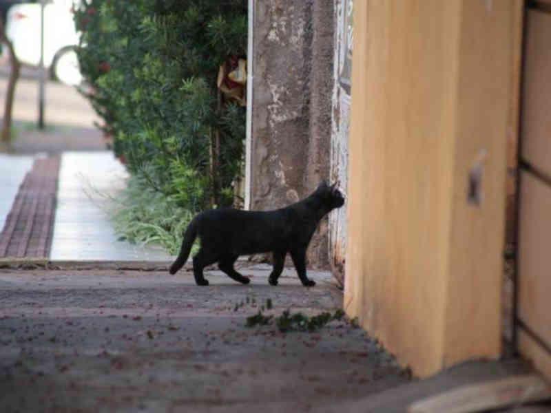 Mais de 10 cães e gatos são mortos envenenados em bairro de Simões Filho, BA