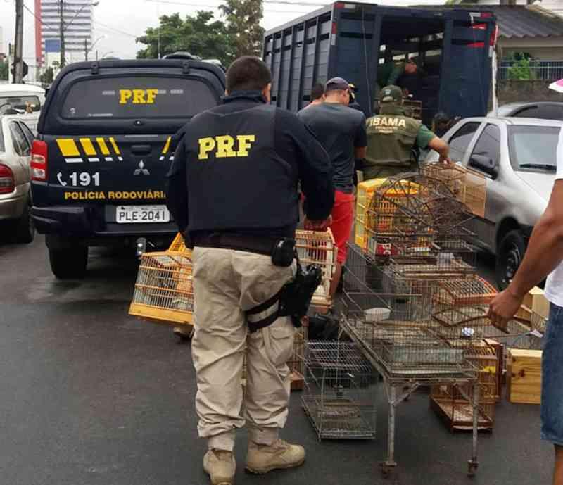 Dezesseis são detidos e 528 aves apreendidas em operação de combate ao tráfico de animais silvestres na BA