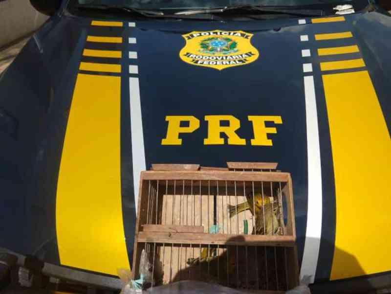 Aves silvestres são resgatadas nos municípios de Nova Soure e Barreiras, na BA