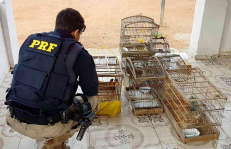 Pássaros silvestres são resgatados às margens da BR-116 em Euclides da Cunha, BA