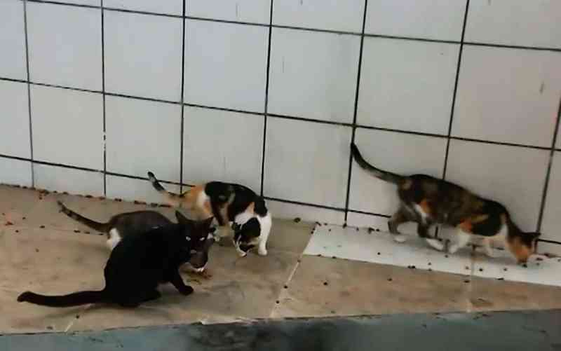 Moradores de condomínio na Bahia denunciam morte de mais de 15 gatos e suspeitam de envenenamento: 'Não pode ficar impune'