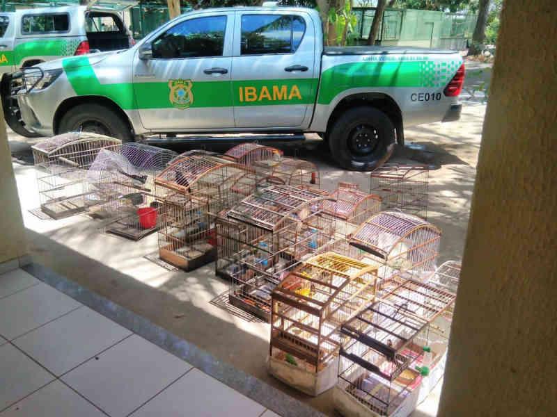 Ibama apreende aves silvestres vendidas por meio de redes sociais em Fortaleza, CE