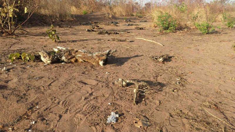 Polícia investiga 'cemitério de cães' em Juazeiro do Norte (CE); cerca de 100 cadáveres foram encontrados