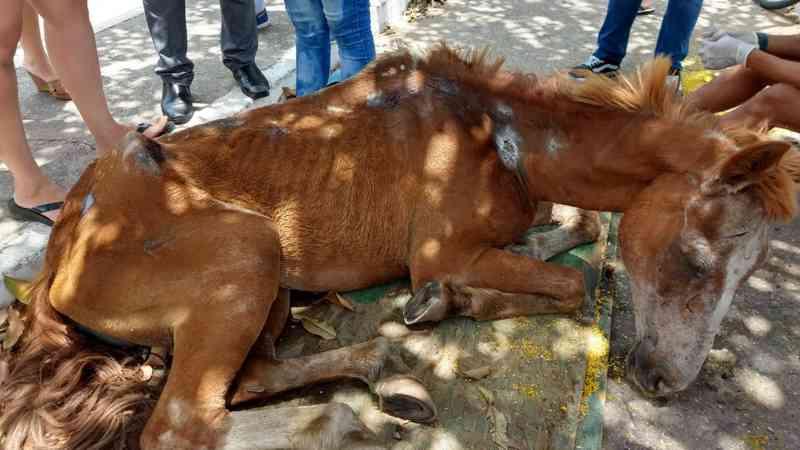 Égua agoniza em Fortaleza (CE) e população não consegue ajuda de órgãos competentes
