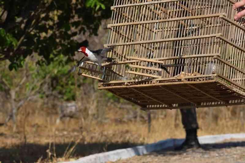 Ibama devolve 600 animais à natureza, no Ceará